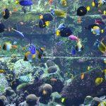 Дубай Аквапарк «Aquaventure» в отеле Атлантис